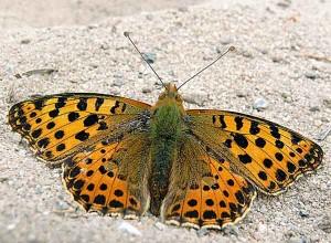 """""""Świat jest piękny! Motyle i inne takie..."""""""